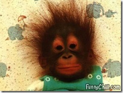 monkey-electrified-hair