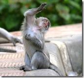 499580-Dancing-Monkey-0