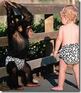 May 1987, Near Vallejo, California, USA --- A baby and a chimpanzee both wear leopard-pattern diapers for a special television program called