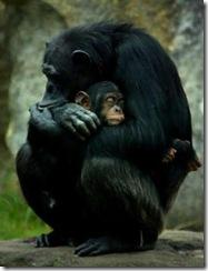 chimp_narrowweb__300x367,0