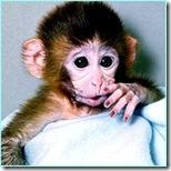 cute_monkey