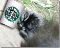 normal_starbucks_coffee