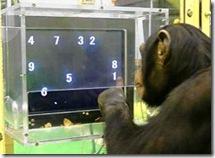 chimpDM2401_468x341