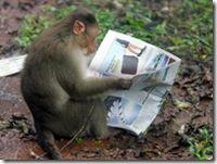 monkey_wideweb__470x3530
