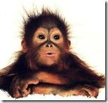 monkeyff
