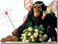 normal_monkey_fairy