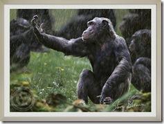 chimpd