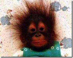 funny-monkey-12