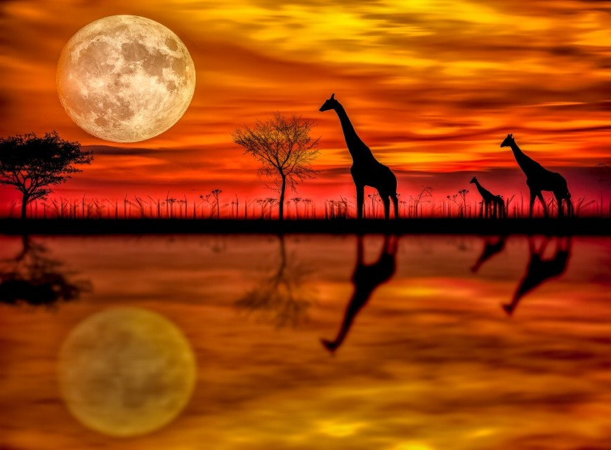 dream-photography-by-naveen-gunda-naveengunda-com-giraffes-full-moon-reflection-1024x755