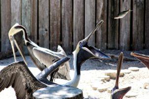 Seaside Seabird Sanctuary Feeding Time