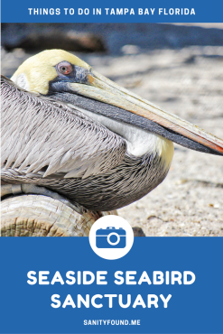 seasideseabird